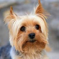 DAISY AND YORKIE - Adapted from a case created by Katarina Gerhatova - Values Exchange Community.
